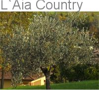 L Aia Country Holidays